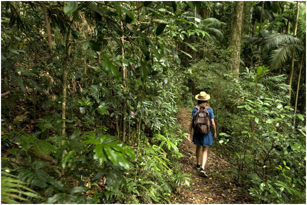 Female hiker walking through a forest trail