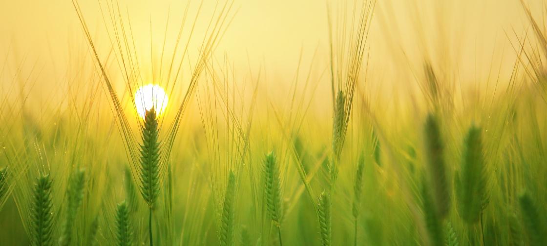 crop_production