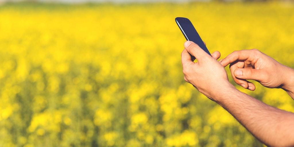 man_field_smartphone_yellow