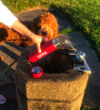water tumbler yoyo dog