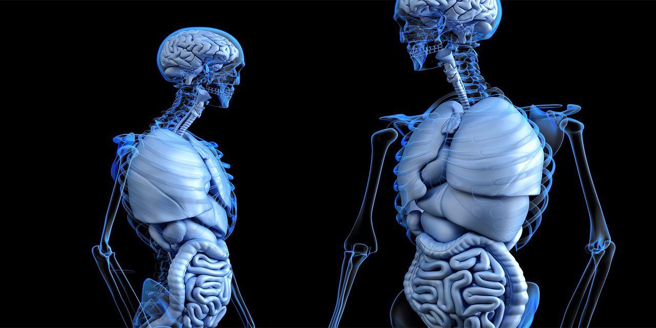anatomical anatomy body gut health human medical
