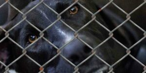 dog-animal-shelter-animal-husbandry-animal-world