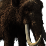 A Biotech company aims to bring back extinct woolly mammoth
