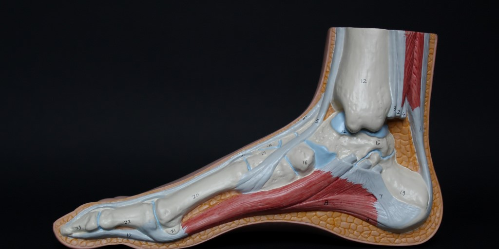 Treatment Options for Tendon Damage